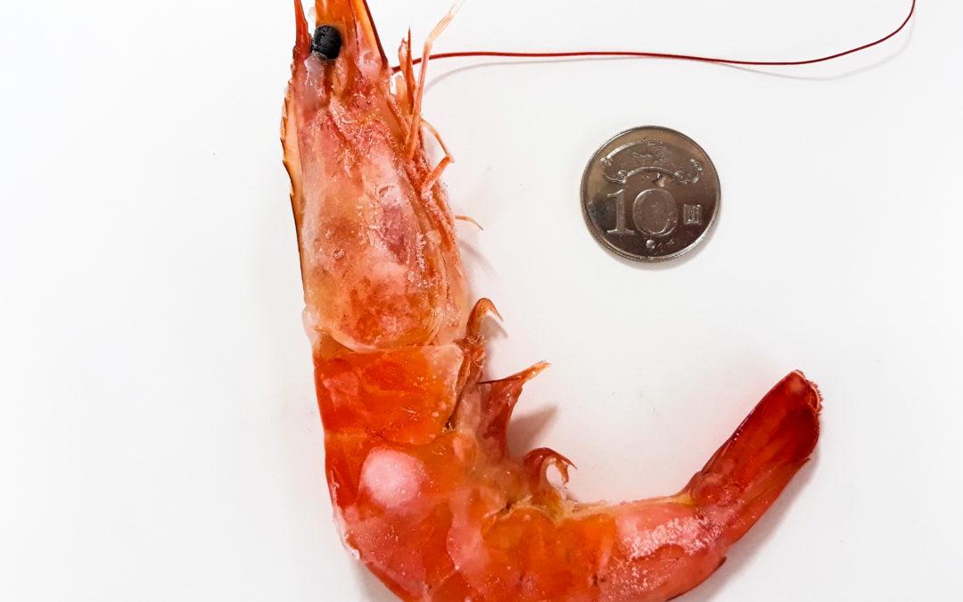 白蝦規格小常識-打點商行的白蝦讓你無法一手掌握